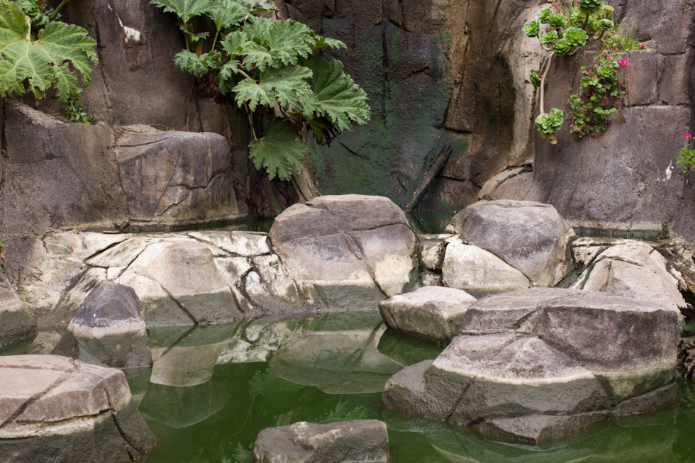 color photograph of fake rocks and green water with plants